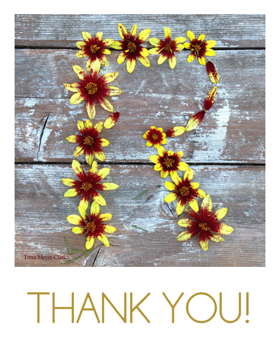 thank you card, tresaMeyerClark, graphic designer, fun, flowers, the daily post