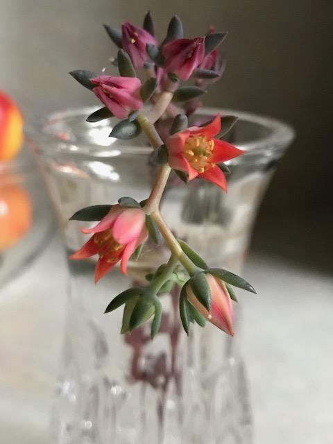 flower1441