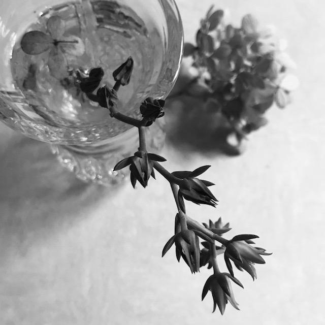 flower1445
